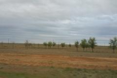 Астраханские степи