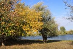 Осенний берег реки Бертюль