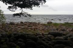 Берег финского залива
