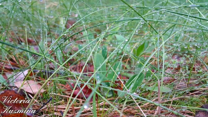трава после дождя