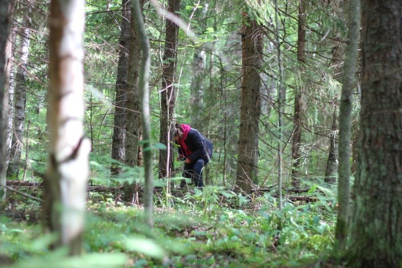 Обследуем лес