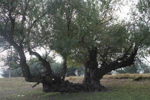 Октябрь_2010_ 135