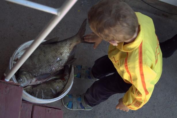 Максик смотрит на рыбу
