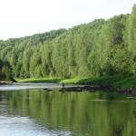 Голавль река Оять