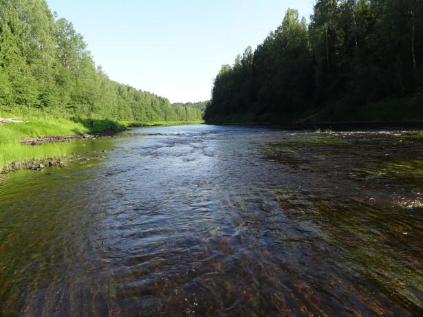 Река Оять летом