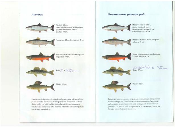 Минимальный размер рыб в Финляндии