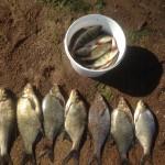 Рыба на Финском заливе