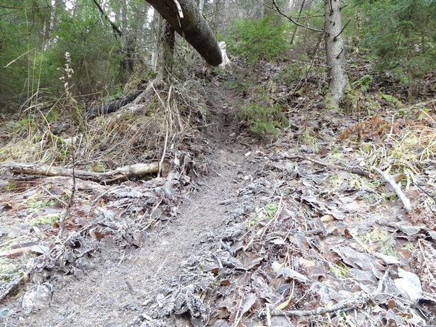 бобры строят плотины