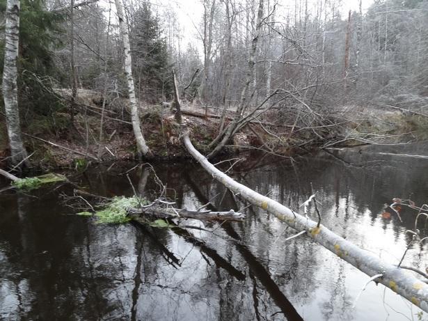 поваленые деревья