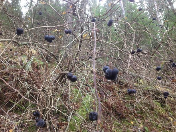 ягоды осенью в лесу