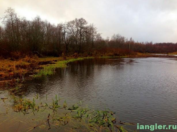 Река Камышовка