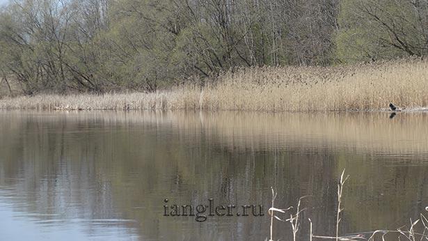 берег реки Волхов