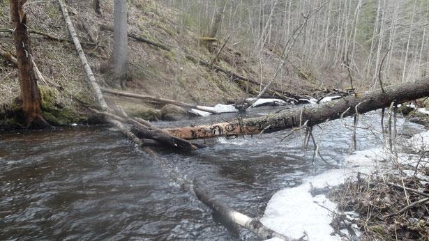 деревья в реке