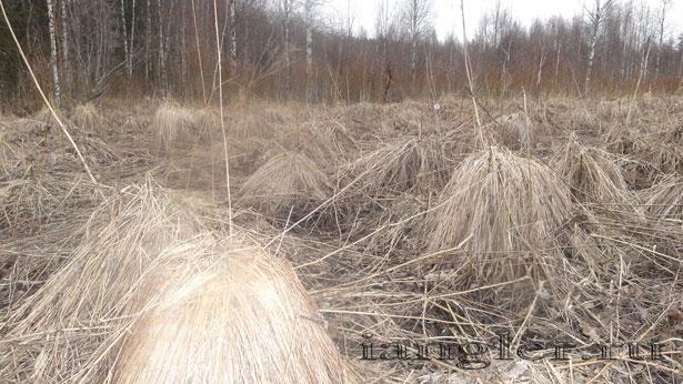 кочки на болоте