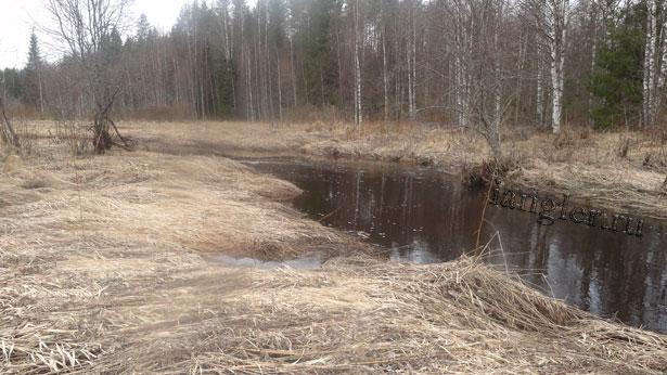 лесная река