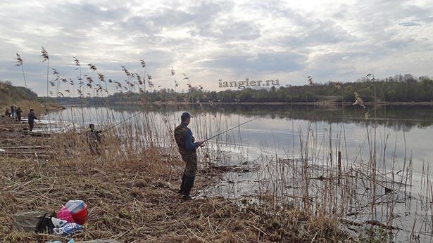 Ловим Синца на реке Волхов