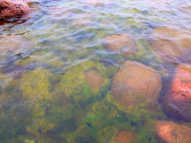 Зелёная тина на Финском заливе