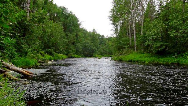 дикая река в лесу