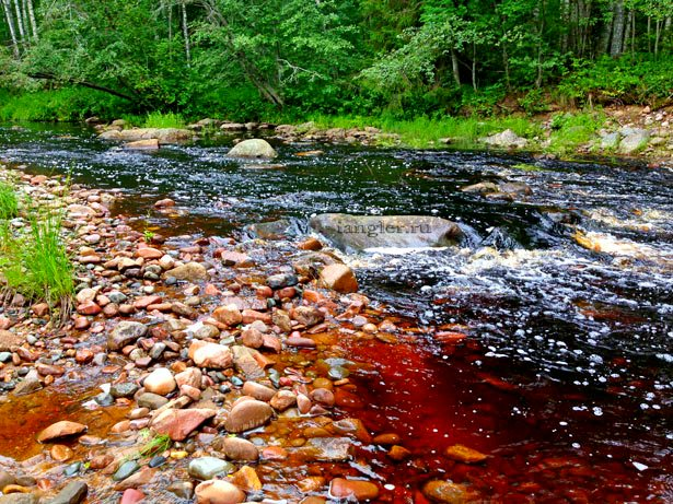 Каменистая лесная река