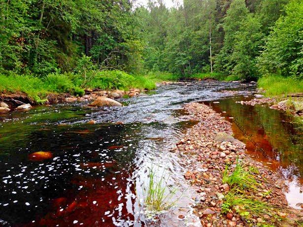 Форелевая каменистая река