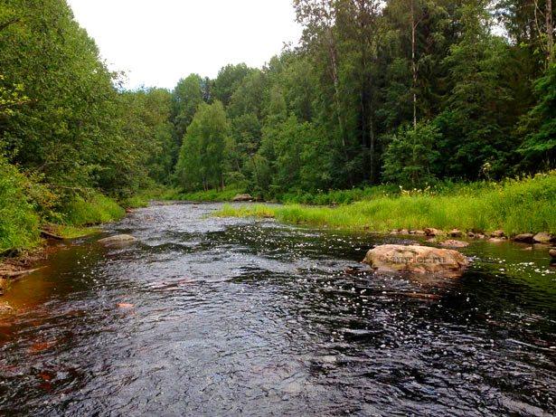 Слияние лесных рек