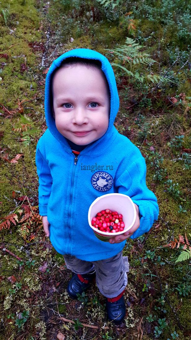 Максим Кузьмин собирает ягоды