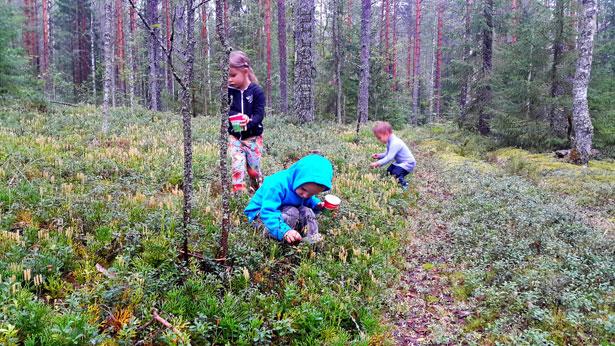 Дети собирают ягоды в лесу