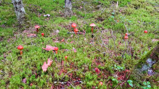 грибы на поляне