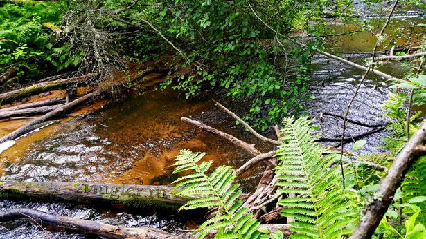 быстрая река в лесу