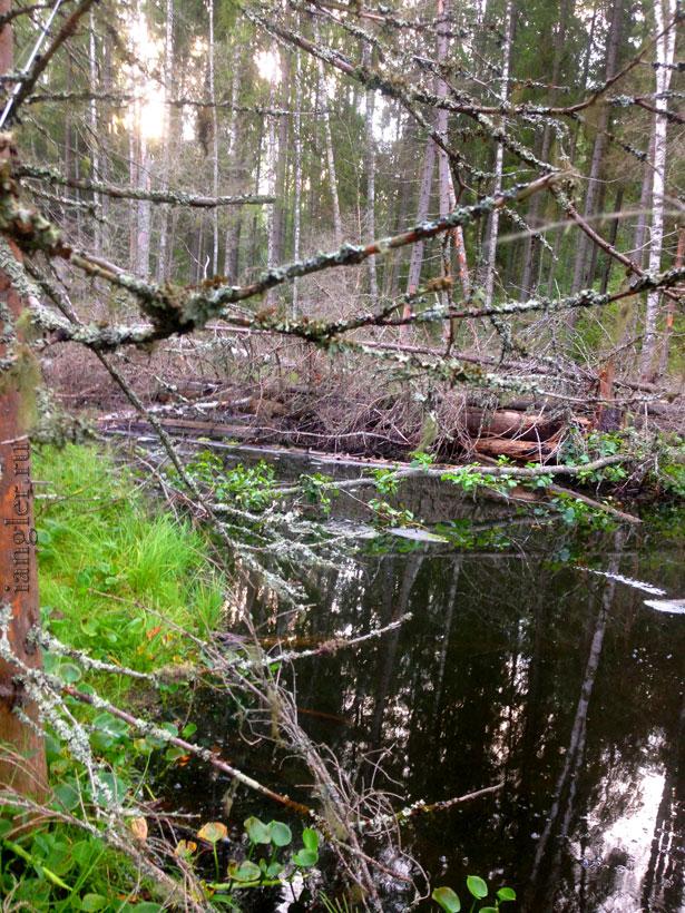 Начало ручья из озера