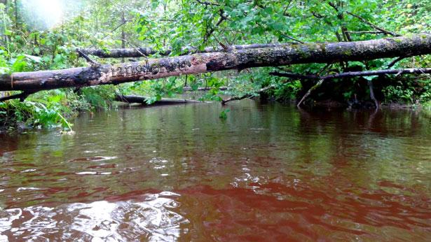 поваленные деревья в реке