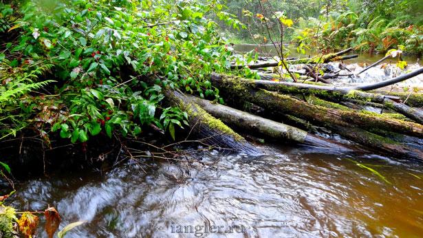 Завал брёвен на реке