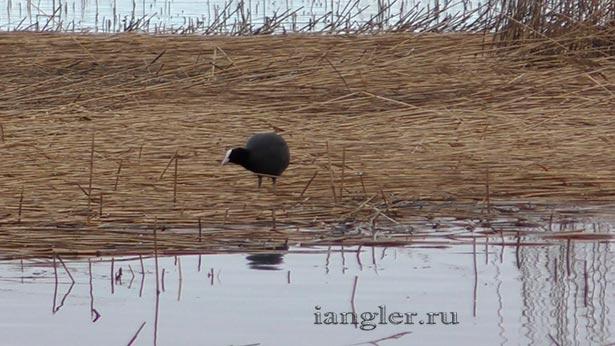 Птица на Финском заливе