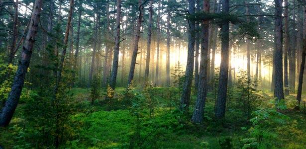 утро на Финском заливе