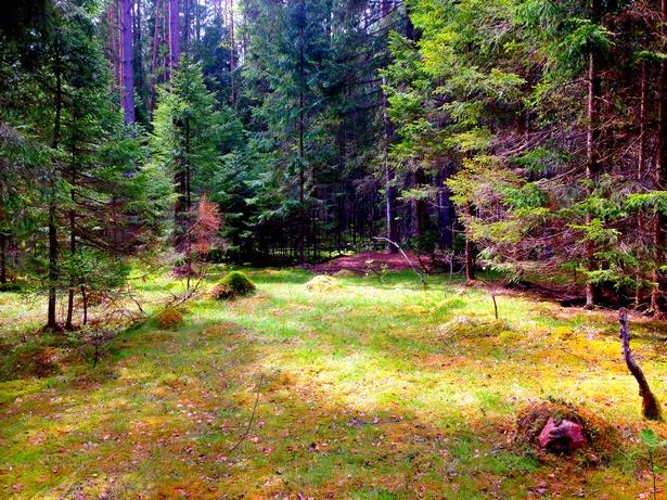 Полянка в лесу
